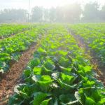 biovegetal-uso-ammendanti-e-sovesci-in-agricoltura