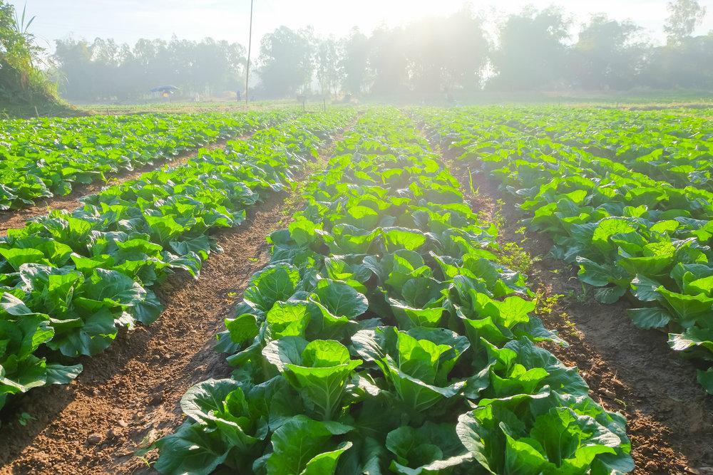 Uso di ammendanti e sovesci: i risultati in agronomia.